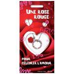 Une rose rouge pour célébrer l'Amour